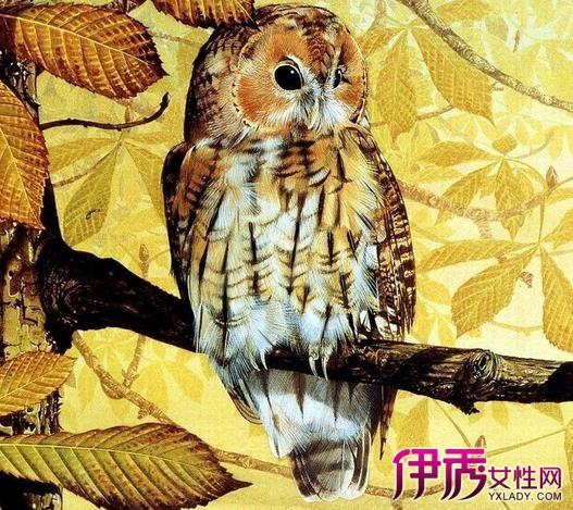 魔法手绘猫头鹰图片