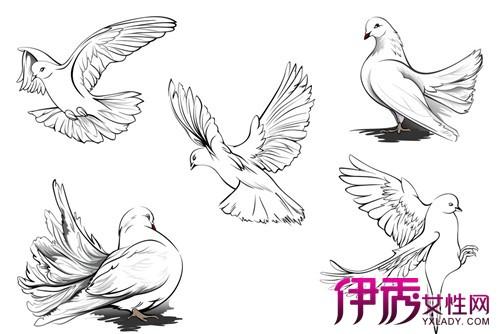 和平和平鸽简笔画图片