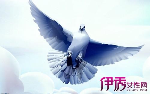手绘和平鸽图欣赏 作为公认世界和平的象征图片