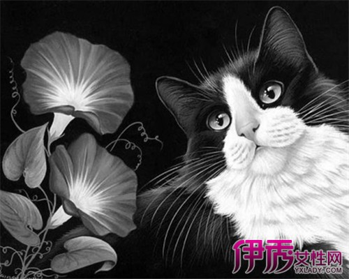 【图】萌猫黑白手绘小插画