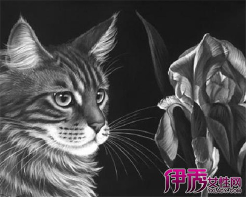 【图】萌猫黑白手绘小插画 4种可爱的猫咪萌化你