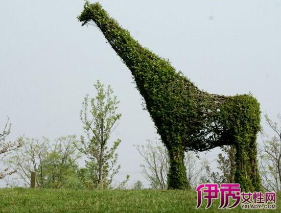 【图】植物小动物造型图片欣赏 创意修剪萌翻眼球