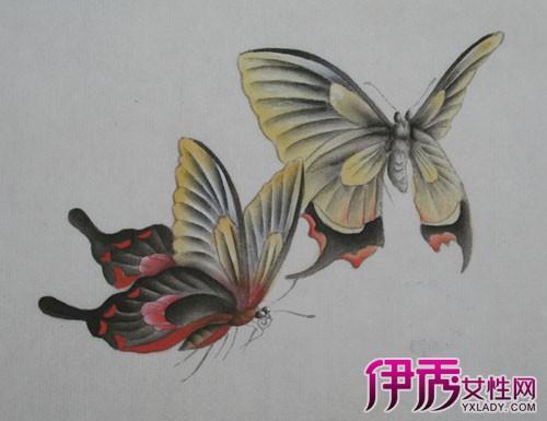 蝴蝶的细小结构图