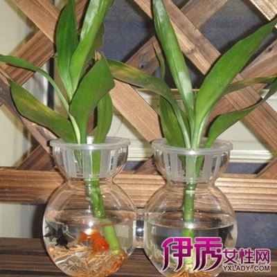 【图】用饮料瓶做花盆的样式图 废物利用的几大好处
