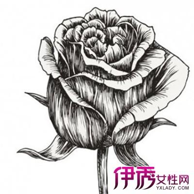 手绘玫瑰花彩铅笔画