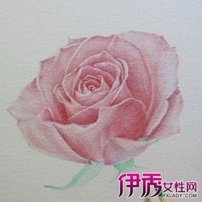 【图】花朵清晰手绘素描图片欣赏 手把手教你画出逼真的玫瑰花