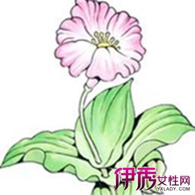 【植物手绘】【图】植物手绘图片欣赏