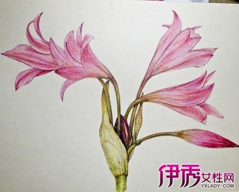 【图】彩铅手绘花卉图片 3部教你绘制精美手绘花卉