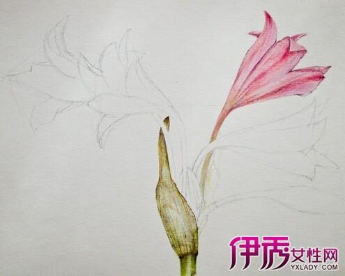 【手绘花卉图片】【图】彩铅手绘花卉图片