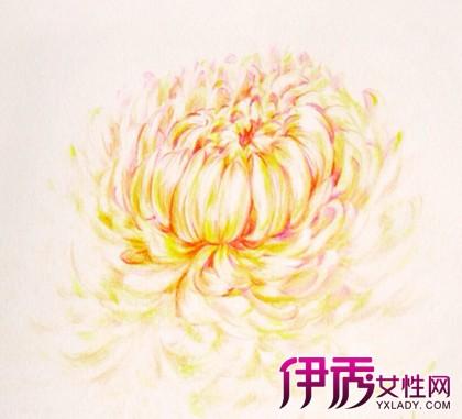 【彩铅手绘花卉】【图】彩铅手绘花卉图