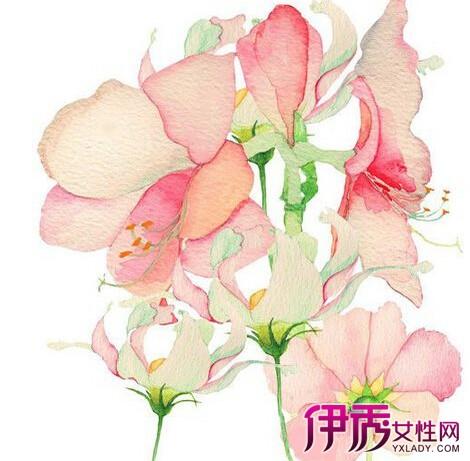 【图】彩铅手绘小清新花朵图片欣