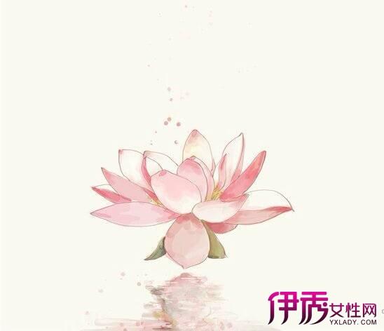 【图】莲花手绘图片展示 揭秘手绘的表现方法