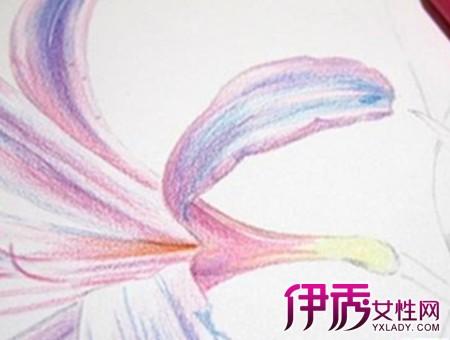 手绘彩铅画花卉绘画教程:紫红色(花骨朵的最后一层色)将花萼上的纹路