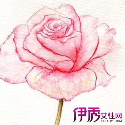 【图】手绘花卉彩铅画入门难吗 教你如何画出美美哒手绘画