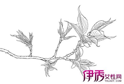 【图】鉴赏玉兰花手绘作品 图画是设计师的语言