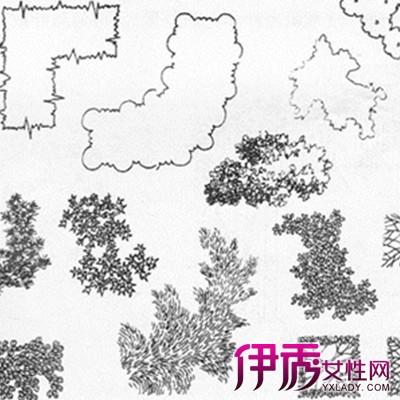 【图】植物手绘平面图展示大全 盘点手绘的各种艺术价值