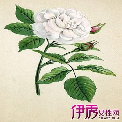 ps素材 植物平面 黑白