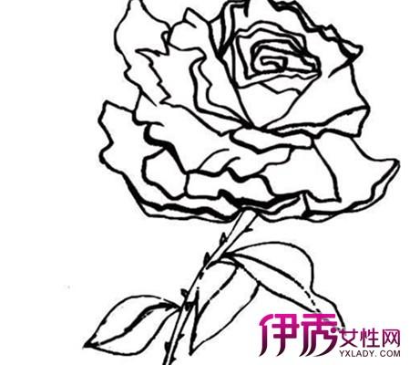 梅花树的简笔画_百度图片搜索展示