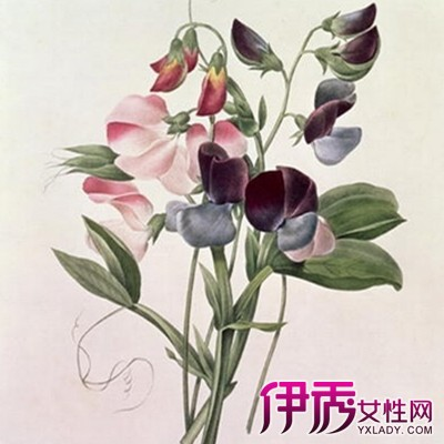 【日本手绘彩铅插画花】【图】日本手绘彩铅插画花