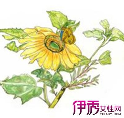 【图】向日葵简笔画图片盘点 教你轻松学会画画