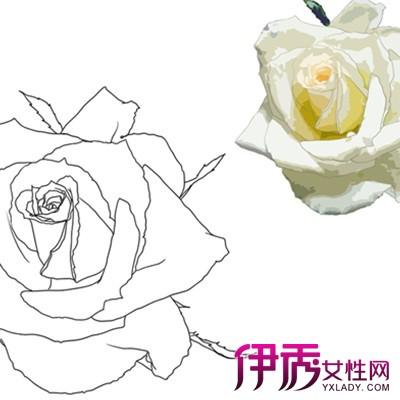 【手绘玫瑰花】【图】怎么画彩铅手绘玫瑰花?
