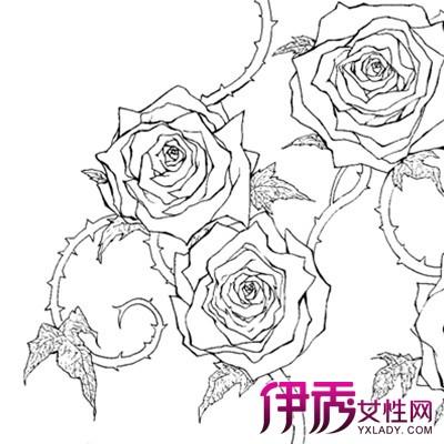 手绘玫瑰花简笔画法 告诉你手绘的表现方法技巧