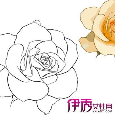 【手绘玫瑰花简笔画法】【图】手绘玫瑰花简笔画法 你