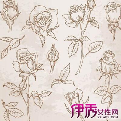 【手绘玫瑰花简笔画法】【图】手绘玫瑰花简笔画法
