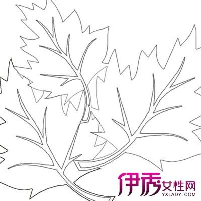【图】手绘树叶简笔画的图片展示 告诉你手绘的3大艺术价值