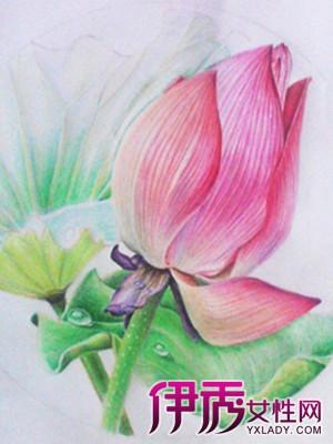 【图】漂亮彩铅手绘荷花简笔画欣赏 手绘的风采另有一番风味