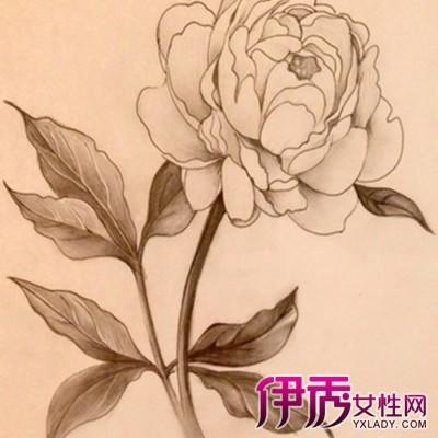 简单手绘花朵铅笔画欣赏 带你了解铅笔画的简介图片
