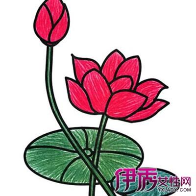 植物花朵简笔画图片展示 简笔画的四大知识介绍