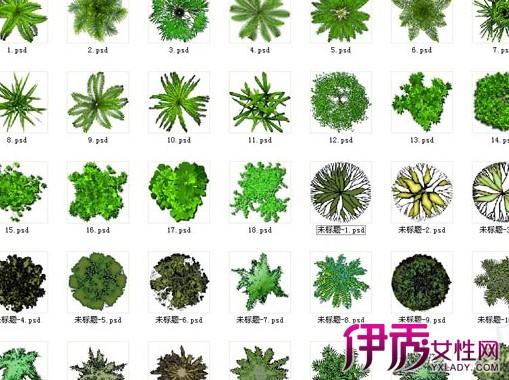【植物配置手绘平面图】【图】植物配置手绘平面图