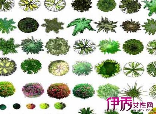 【图】植物配置手绘平面图展示 教你如何设计植物配置