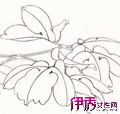 【图】素描花朵手绘简笔画 教你学会画画