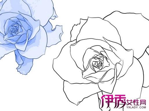 【图】手绘玫瑰花简笔画素材展示 从三个技巧里学习手绘