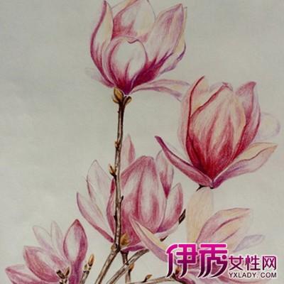 【彩铅手绘花朵】【图】欣赏三个好看的彩铅手绘花朵