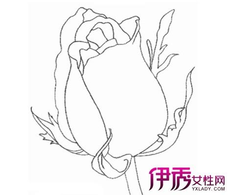 【玫瑰花的画法】【图】玫瑰花的画法有哪些
