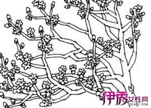 【手绘木棉花】【图】手绘木棉花图片展示