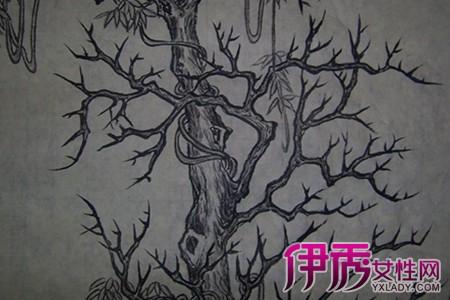 【树藤手绘图片】【图】树藤手绘图片展示