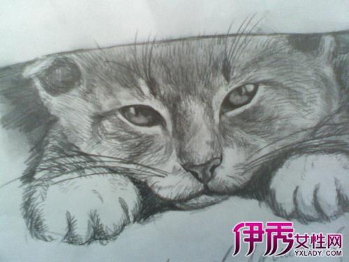 【手绘动漫q版萌猫咪】【图】手绘动漫q版萌猫咪素描