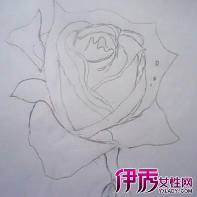 【手绘玫瑰花的画法】【图】手绘玫瑰花的画法展示