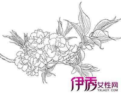 【图】牡丹手绘图片欣赏 手绘的4个设计表现介绍