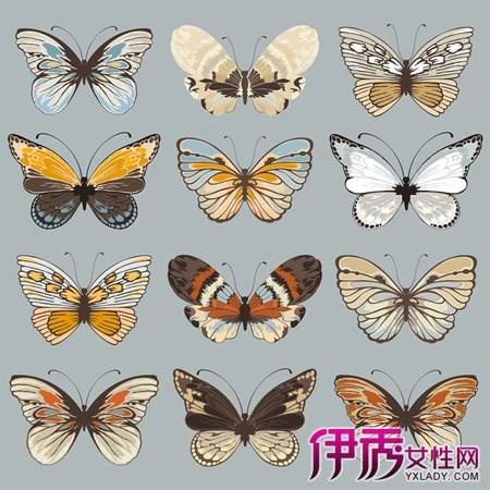 【手绘古风蝴蝶】【图】观赏手绘古风蝴蝶图片