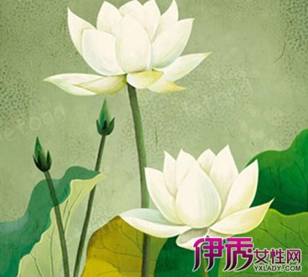 【图】莲花图片手绘大全 海量手绘莲花大图来袭