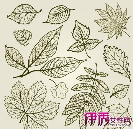 样制作手绘枫叶简笔画 教你制作简单的手绘枫叶笔画