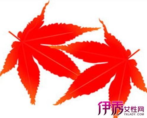 红枫植物平面图手绘
