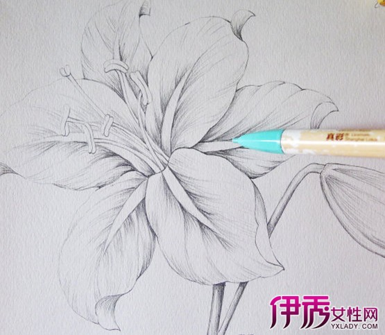 【铅笔手绘花】【图】铅笔手绘花怎么画?