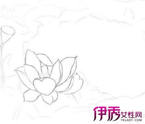 【简单手绘荷花铅笔画】【图】简单手绘荷花铅笔画