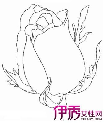 【图】玫瑰花的画法步骤 娇艳欲滴惹人爱